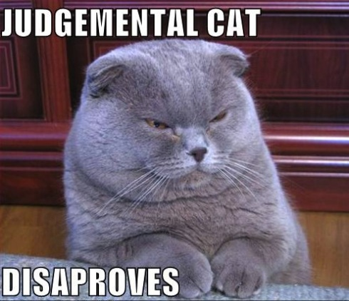 judgemental-cat-disapproves-lolcat