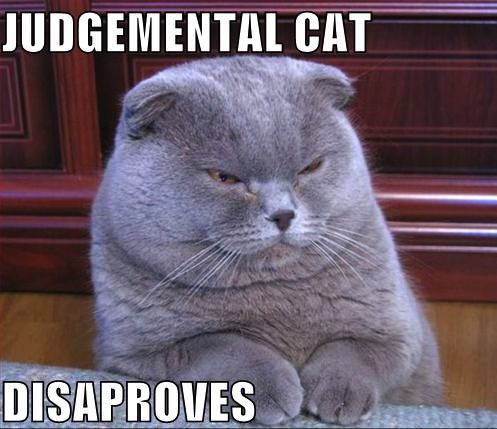 image: judgemental-cat-disapproves-lolcat