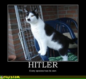 cats, kittens, dogs, pets, animals, hitler, nazis, parents, moms, allergies, dads, parenting